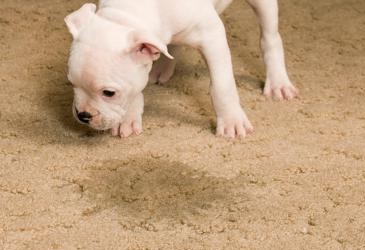 4 Steps For Removing Pet Stains From